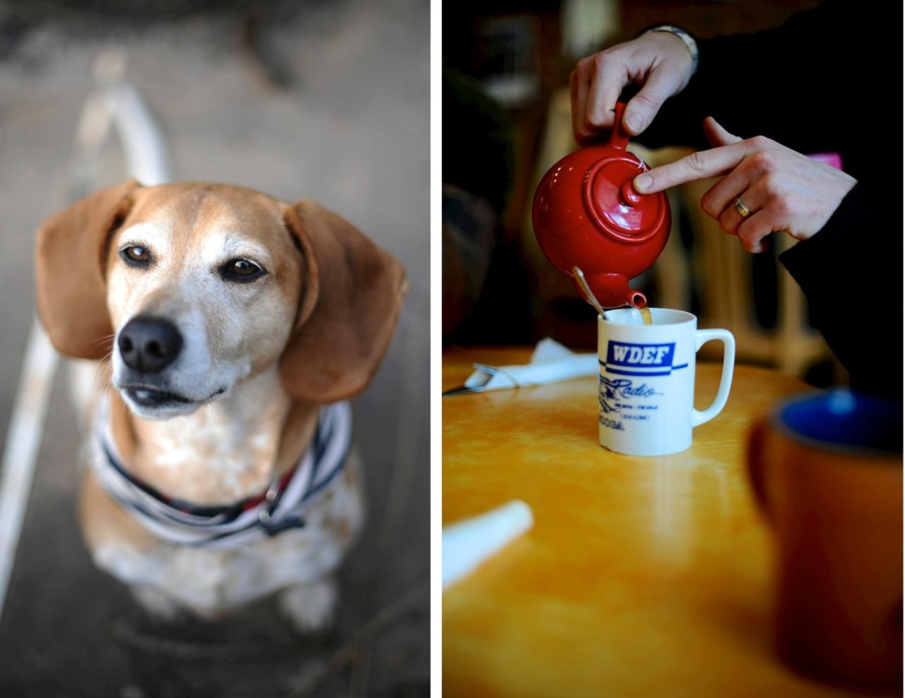 dog and tea